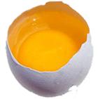 My Dog Eat Egg Yolk